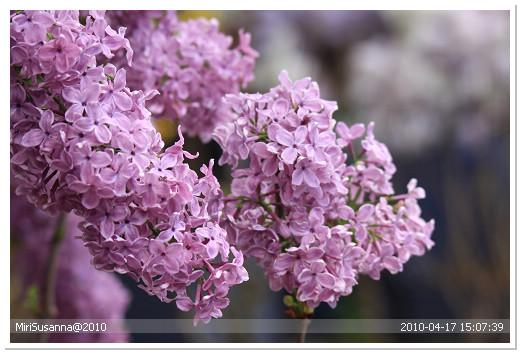 20100417 50D 207.jpg