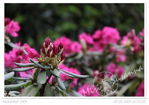 20090520 50D 390.jpg