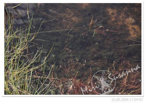 20090510 50D 101.jpg