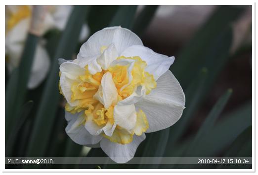 20100417 50D 230.jpg