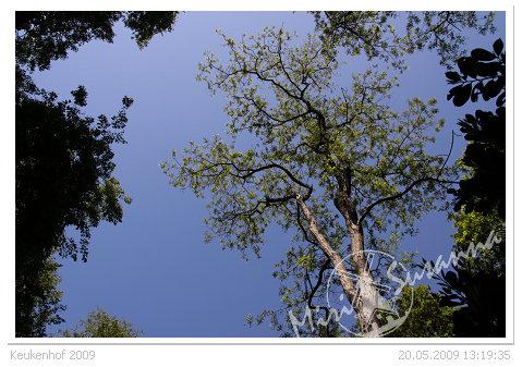 20090520 50D 016.jpg