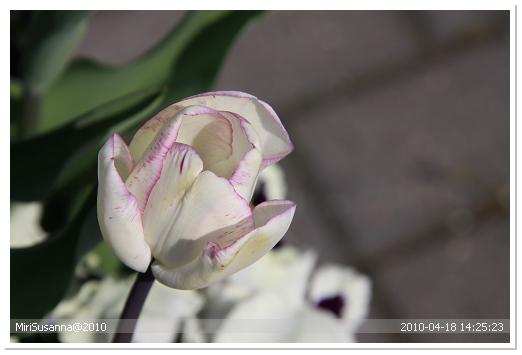 20100418 50D 226.jpg