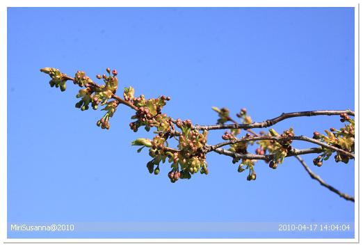 20100417 50D 147.jpg