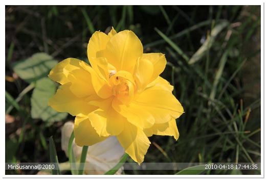 20100418 50D 384.jpg
