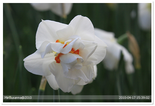20100417 50D 256.jpg